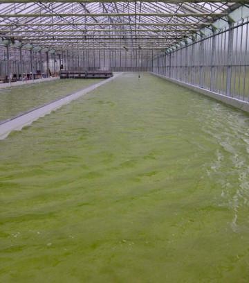 algen-hmeer